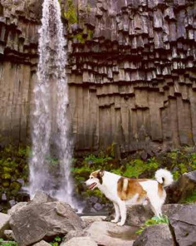 hund-ved-vandfald.jpeg